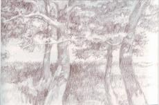 Рисуем карандашом: деревья в ландшафте